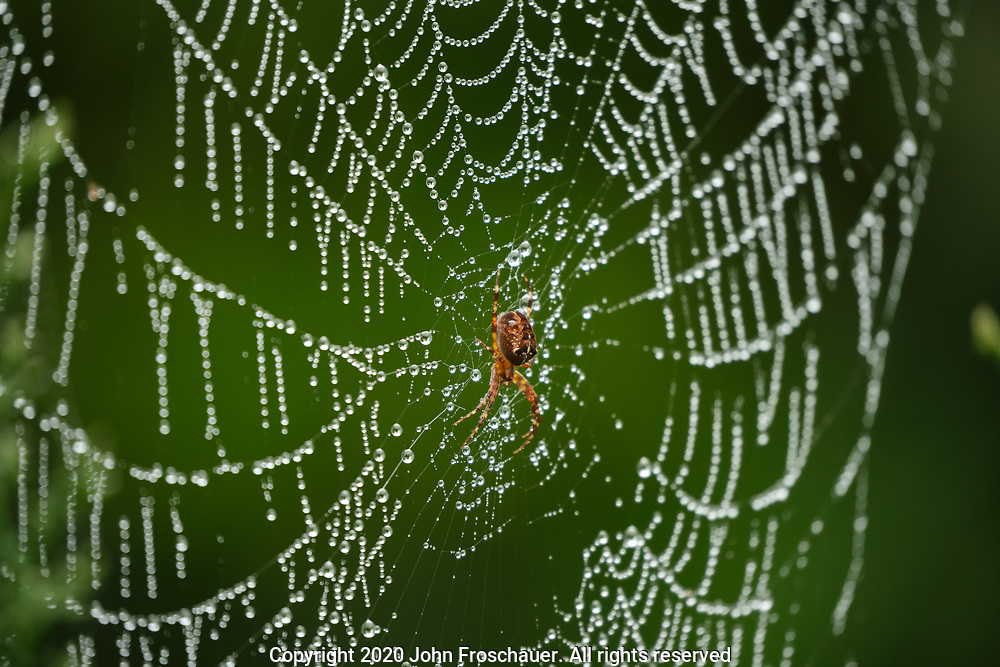 Spider in it's web with dew as seen in a cloudy day, Saturday, Oct. 3, 2020, in Tacoma. (AP Photo/John Froschauer)