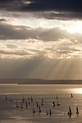 Sailboat Race - Puget Sound - Seattle - Washington State