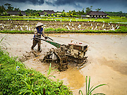 18 JULY 2016 - UBUD, BALI, INDONESIA:    A farmer prepares a rice field for planting near Ubud. Rice is an integral part of the Balinese culture. The rituals of the cycle of planting, maintaining, irrigating, and harvesting rice enrich the cultural life of Bali beyond a single staple can ever hope to do. Despite the importance of rice, Bali does not produce enough rice for its own needs and imports rice from nearby Thailand.    PHOTO BY JACK KURTZ