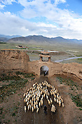 JINGTAI, CHINA - JUNE 20: (CHINA OUT) <br /> <br /> City inside 12 meter high walls<br /> <br /> A villager leads a herd of sheep outside the Yongtai Acient City on June 20, 2015 in Jingtai County, Gansu Province of China. The Yongtai Ancient City, also known as the Turtle city, was built in 1608 during the Ming Dynasty (1368-1644). With a perimeter of 1,717 meters, the city wall is 12 meters in height. The city also has a six-meter wide and one-to-2.5-meter deep moat. In 2006, the city was listed as the sixth batch of nation key cultural relic preservation organ. There are more than 100 villagers still living in the city. <br /> ©Exclusivepix Media