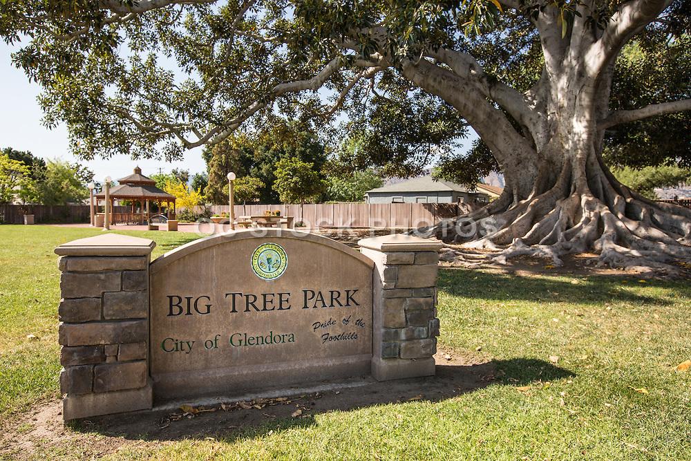 Big Tree Park of Glendora