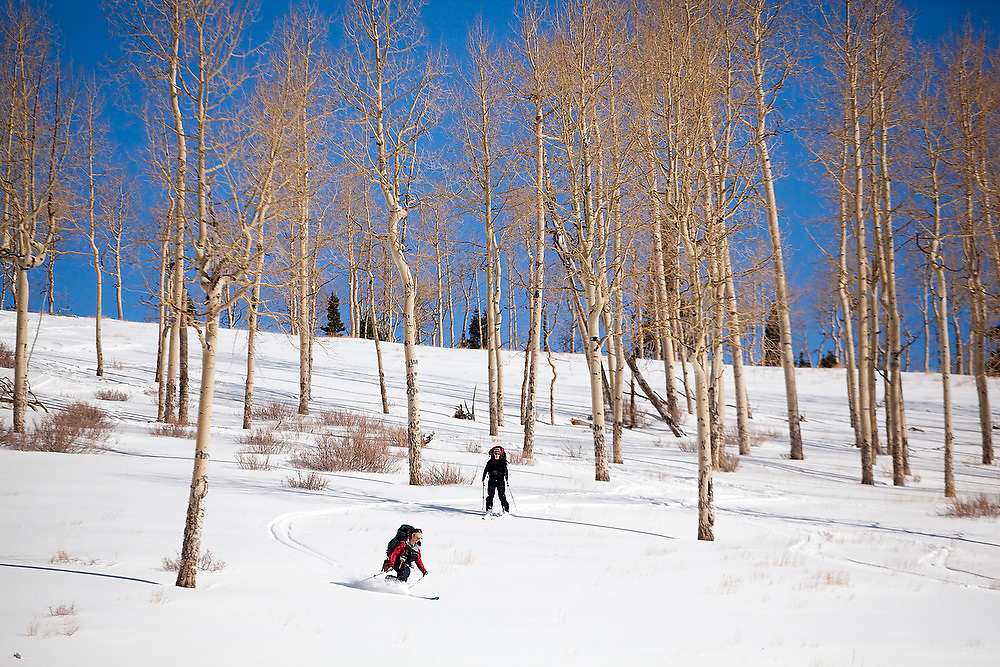 Backcountry skiers catch turns in an open aspen grove in Uncompahgre National Forest, Colorado.