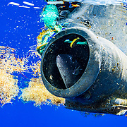 A triggerfish hides inside a discarded plastic octopus trap in the middle of the Atlantic Ocean.