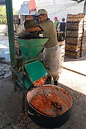 A worker adds guava fruits to a press, during the first step of making guava bars at La Panchita. Florida, Cuba.