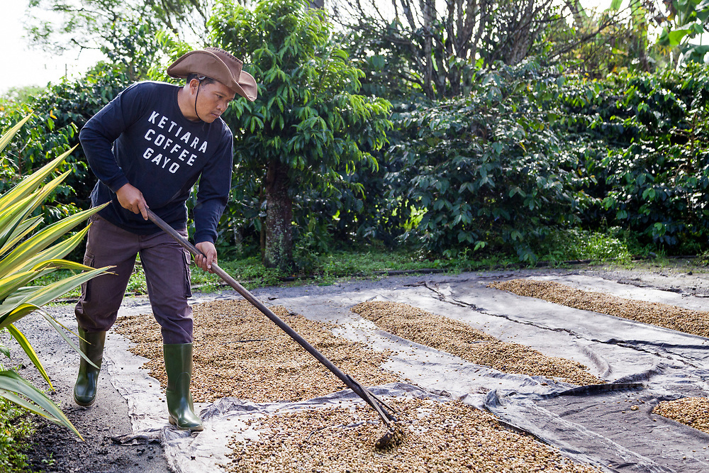 Pak Budiman (42) dries coffee beans. Pak Budiman has been a member of Ketiara since 2010.  The biggest challenges for him as a farmer is the dry season and price instability.  As a farmer, he is able to support his family