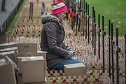 A volunteer takes a pause for reflection - Volunteers from the Royal British Legion set out the Field of Remembrance outside Westminster Abbey. The field comprises thousands of poppies on crosses to remember individuals and units. It will be completed in time for a Royal visit on Thursday . London 07 Nov 2017.