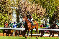 Jockeys before race, Keeneland Racecourse, Lexington, Kentucky USA.