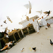 Pigeons fly on top of roof with owner, Lucknow, Uttar Pradesh, India