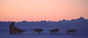 Doglsedding in front of the Alaska Range