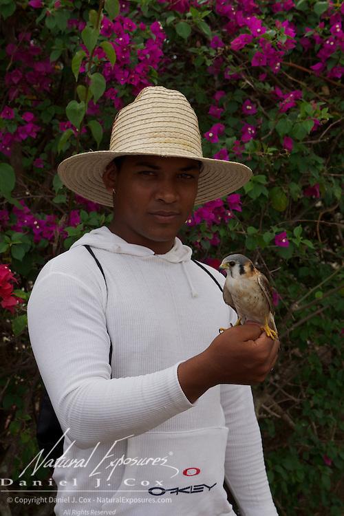 Local Cuba man with a kestrel. Cuba.