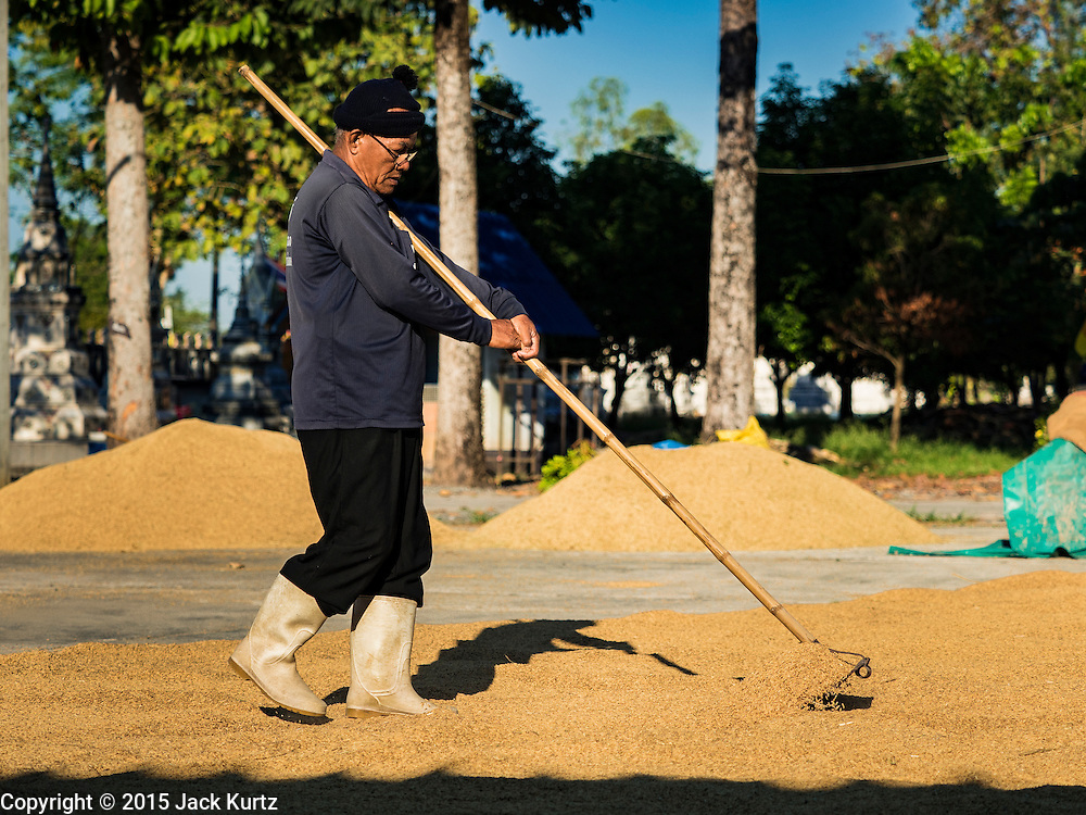 """08 DECEMBER 2015 -  NONG SAENG, NAKHON NAYOK, THAILAND:  A worker at a rice drying business spreads rice to dry in the sun during the rice harvest in Nakhon Nayok province, about two hours north of Bangkok. Thai agricultural officials expect rice prices to go up by as much as 15% as global production of rice is cut by the Pacific Ocean El Niño weather pattern. Thailand's rice production is expected to drop in the coming year. Persistent drought has reduced the main crop, currently being harvested, and the military government has ordered farmers not to plant a second crop of """"dry season"""" rice to conserve Thailand's dwindling supply of water. Thailand's water reservoirs are at their lowest seasonal levels in recent memory and little rain is expected during the dry season, which lasts until June.   PHOTO BY JACK KURTZ"""