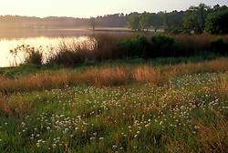 Stock photo of a rural field of flowers along a country lake at sunset