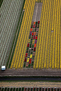 Nederland, Noord-Holland, Gemeente Anna Paulowna, 28-04-2010; bloembollenvelden in de Anna Paulowna Polder met voornamelijk narcissen. Door de zandgrond is de polder in Kop van Noord-Holland (Noordkop) is een ware bollenstreek..Flower fields in the Anna Paulownapolder, with mostly tulips and daffodils. Because of the sandy soil the polder in the very north of North-Holland is a true flower bulb region. .luchtfoto (toeslag), aerial photo (additional fee required).foto/photo Siebe Swart