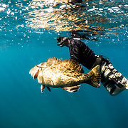 Summer Diving 18