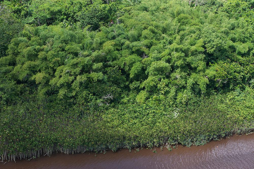Bamboo<br /> Essequibo River<br /> GUYANA<br /> South America<br /> Longest river in Guyana