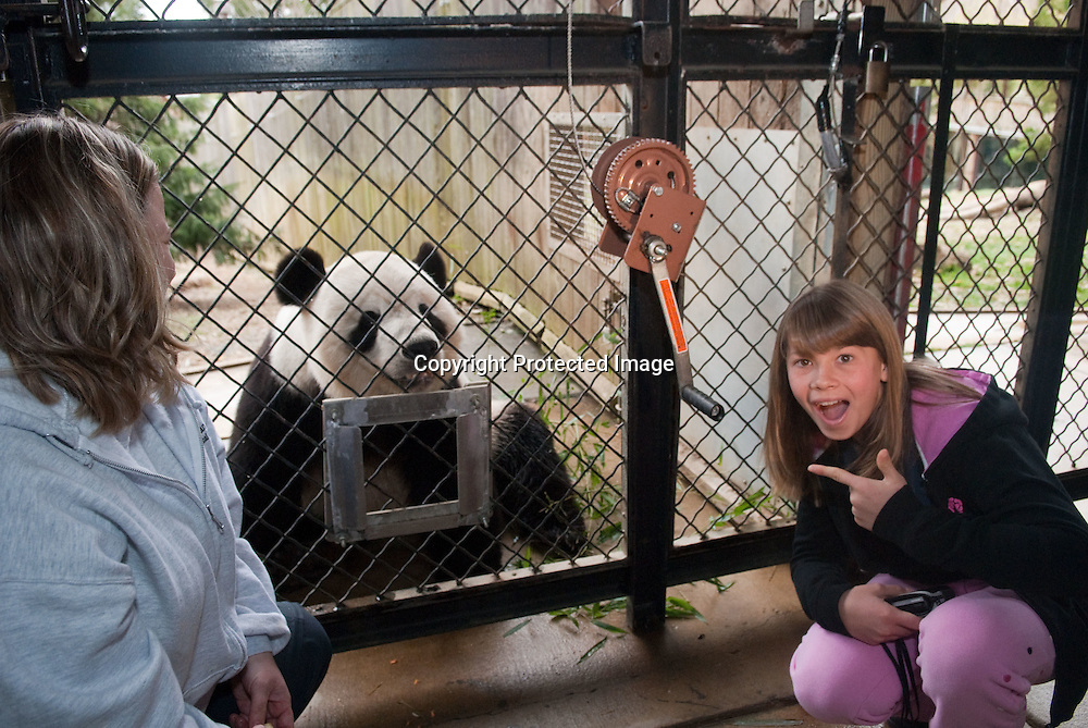 """(*Handout*) MAR-11-2010: Bindi Irwin poses with Tian Tian for a photo inside the Panda Habitat during a promotional event for her upcoming """"Free Willy 4: Escape from Pirate's Cove"""" movie at the National Zoo in Washington DC on March 11, 2010. Photo by Kris Connor for Warner Bros."""