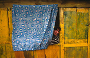 A young Nepali man peers out from a curtain to talk to an unseen neighbour in a remote village near Ulleri, in the Himalayan foothills, Nepal. It is a colourful (colorful) scene as the curtain fabric is a striking blue with mauve leaf motifs drawn in but it is a natural opposite colour against the badly-painted yellow wooden walls of his shack. Villages such as these partly-depend on the agriculture of rice-growing and also on the passing tourist trade. Western trekkers walk through these tiny communities on their way up the series of climbing trails of the Annapurna Conservation Sanctuary circuit, a sometimes rigorous walk from the low hills of Pokhara to the higher altitudes of Annapurna, the (26,000 feet (8,000 metre) peak. Tea houses are dotted along the trail offering lodging, refreshments and basic, but delicious food to the weary traveller.