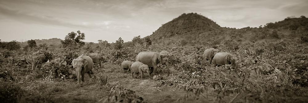 Elephant Safari, Minneriya Giritale National Park, Sri Lanka