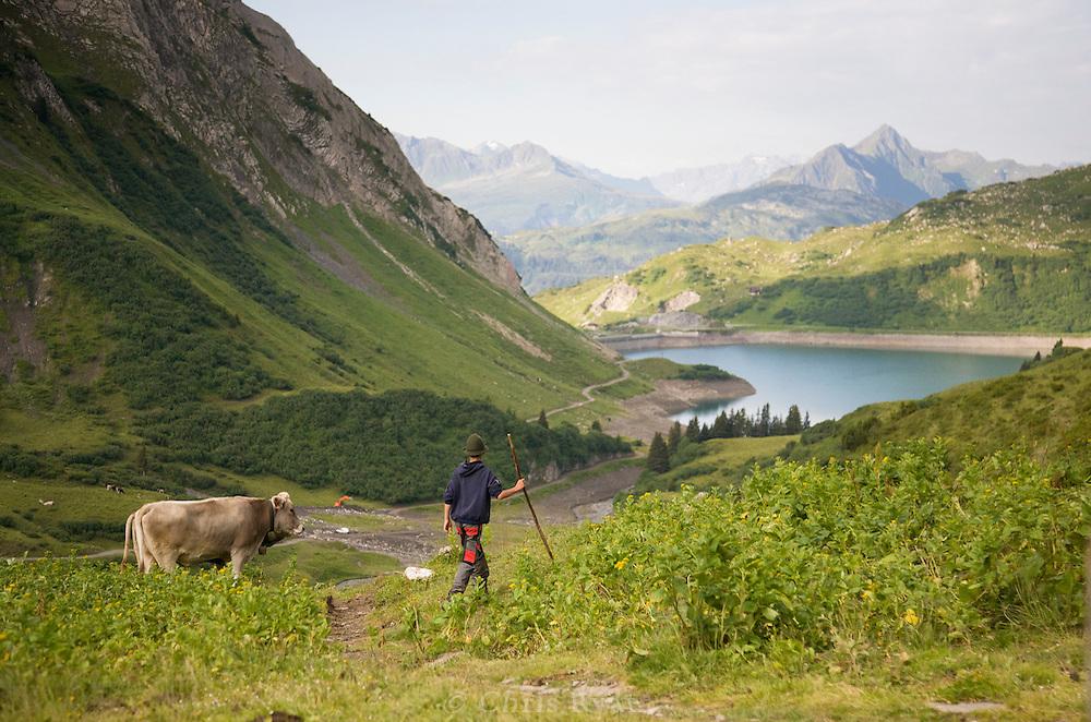 Boy farmer guiding cattle in the west Austrian Alps