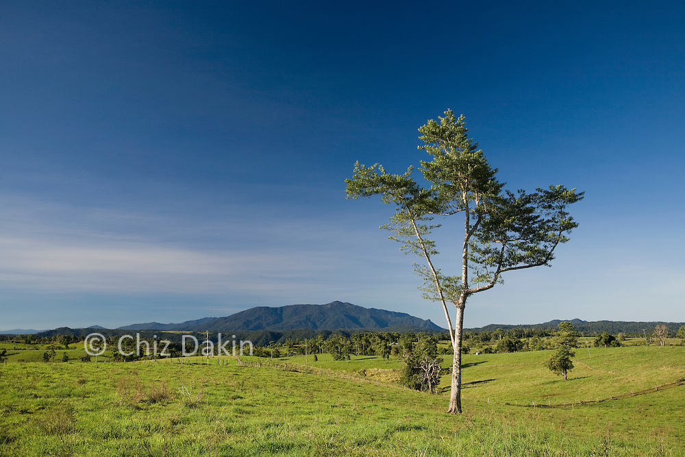 Typical rolling upland grassy fields of the Atherton Tablelands, North Queensland, Australia.