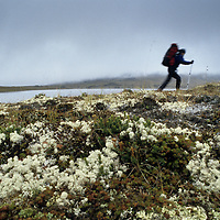 HIKING, Jill Matlock (MR) hikes in tundra by remote lake, Logan Mts.,Yukon Territory, Canada
