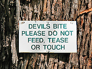 "A sign warns ""DEVILS BITE, PLEASE DO NOT FEED, TEASE OR TOUCH"" at Bonorong Wildlife Park, Brighton, Tasmania, Australia. The Tasmanian devil (Sarcophilus harrisii) is a carnivorous marsupial of the family Dasyuridae, now found in the wild only on the island state of Tasmania. The devil is an iconic symbol of Tasmania and attractor of tourists, many of whom know the Looney Tunes cartoon character, the ""Tasmanian Devil."" Ancient marsupials probably migrated from what is now South America to Australia tens of millions of years ago during the time of Gondwana. Tasmanian devils probably disappeared from the Australian mainland around 3000 years ago due to predation by dingoes (wild dogs probably introduced by aborigines much earlier), which are absent on Tasmania. Formerly hunted by humans, the devils became officially protected in 1941. Since the late 1990s, devil facial tumor disease has drastically reduced devil numbers, and in 2008 the species was declared endangered. Illegally introduced red foxes kill devils, and motor vehicles dispatch devils that are on the road eating other road kill. Due to export restrictions and the failure of overseas devils to breed, almost no devils live legally outside of Australia. The size of a small dog, the Tasmanian devil became the largest carnivorous marsupial in the world following the extinction of the thylacine in 1936. It has a stocky and muscular build, black fur, pungent odor, extremely loud and disturbing screech, keen sense of smell, and ferocity when feeding. It has an exceptionally strong bite, hunts prey, scavenges carrion, climbs trees, and swims across rivers."