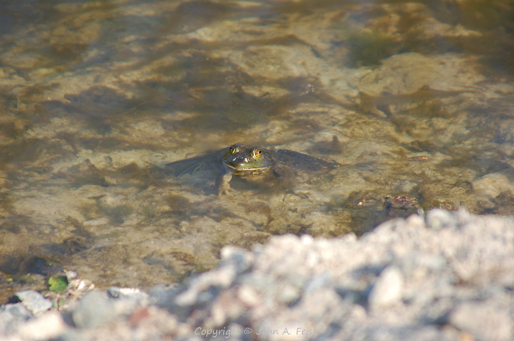 This frog was taking his time enjoying the sun on the D and R canal in Hillsborough, NJ