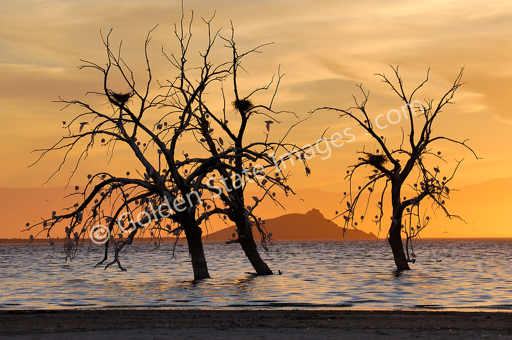 A few long dead oak trees still stand in the brackish water likely preserved by the extremely high salt content.