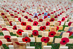 © Licensed to London News Pictures. 09/11/2016. London, UK. The Royal British Legion Poppy Factory Field of Remembrance in Westminster Abbey, London. Remembrance Sunday is at the end of this week, 13 November. Photo credit : Tom Nicholson/LNP