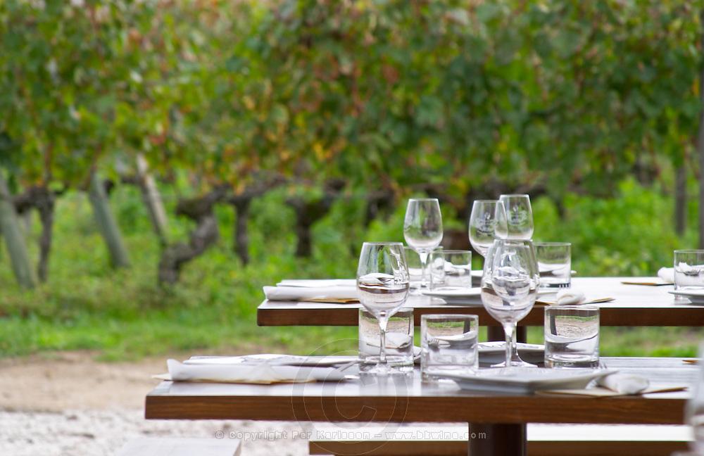 Lunch table in the vineyard. Clos Saint Julien, Saint Emilion, Bordeaux, France