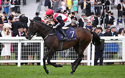 Brother Bear ridden by Jockey Colm O'Donoghue goes to post for the Jersey Stakes