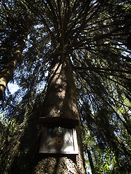 CZECH REPUBLIC VYSOCINA NEDVEZI 16JUL11 - A picture of Jesus Christ hangs on a tree in a spruce and pine forest near the village of Nedvezi in Vysocina, Czech Republic.....jre/Photo by Jiri Rezac....© Jiri Rezac 2011