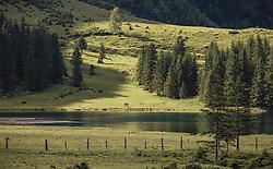 THEMENBILD - der Hintersee im Abendlicht. Der Hintersee ist ein kleiner Gebirgssee in 1313 m Höhe im Talschluss des Felbertals in Mittersill. Der Bergsee ist ein Naturdenkmal und wurde unter Schutz gestellt. Der Hintersee gilt als Geheimtipp, Erholungsgebiet und ein Platz, den man gesehen haben muss, aufgenommen am 23. Juni 2019, am Hintersee in Mittersill, Österreich // the back of the lake in the evening light. Hintersee is a small mountain lake 1313 m above sea level at the end of the Felbertal valley in Mittersill. The mountain lake is a natural monument and was placed under protection. The Hintersee is an insider tip, a place you must have seen and a recreation area on 2019/06/23, Hintersee in Mittersill, Austria. EXPA Pictures © 2019, PhotoCredit: EXPA/ Stefanie Oberhauser