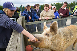 Group of adults with learning disabilities on a trip to an animal centre watching a pig being fed,