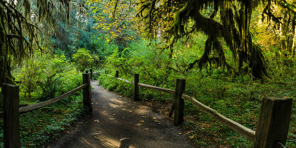 A shaded pathway winds its way through the Hoh Rainforest in the Olympica National Park.