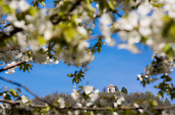 Šmarna gora / Mount Saint Mary with a Baroque church of the Mother of God above Ljubljana, 669 m above sea level, popular hiking destination, picture take through cherry blossoms, on April 18, 2018 in Ljubljana, Slovenia. Photo by Vid Ponikvar / Sportida