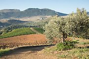 Tilt shift photograph of an olive tree and a farm, Sicilian countryside near Palermo, Sicily