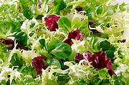 Fresh green salad leaves food photos