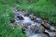 Fresh mountain water tumbles over rocks in spring in Santa Fe National Forest, New Mexico.