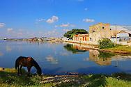 Horse grazing by the harbor in Cienfuegos, Cienfuegos Province, Cuba.