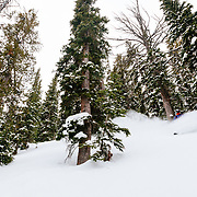 Hadley Hammer skis the last powder of the season in the Teton backcountry near JHMR.