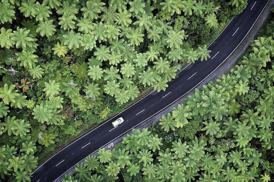 Ferns on the road, Rotorua.