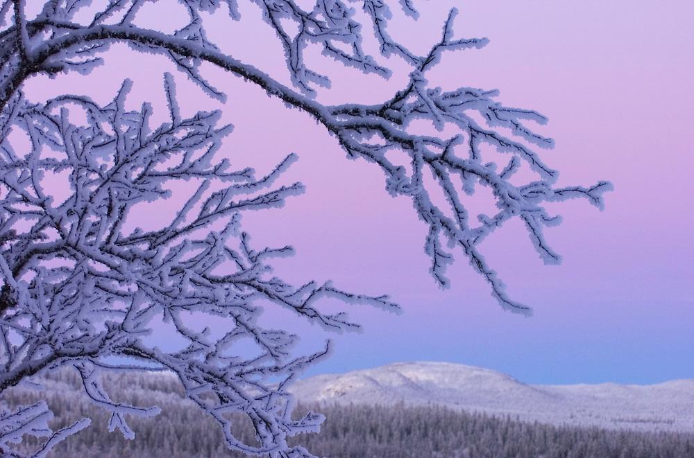 Vindelfjallen National Park, Vasterbotten, Lapland, Sweden. Ecotourism