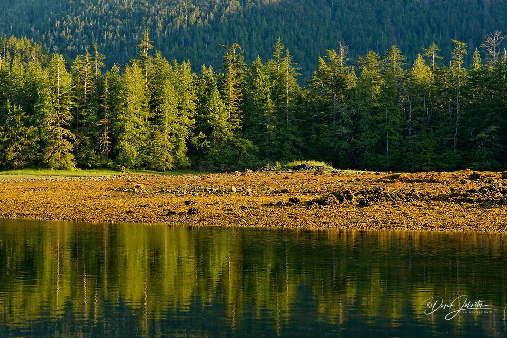 Reflections in Island Bay, Haida Gwaii (Queen Charlotte Islands) Gwaii Haanas NP, British Columbia, Canada