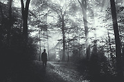 Wanderer in a misty forest at sunrise - monochrome photograph