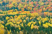 Acadian forest in autumn foliage. Near Edmunston. Madawaska County,<br />Saint-Jacques<br />New Brunswick<br />Canada
