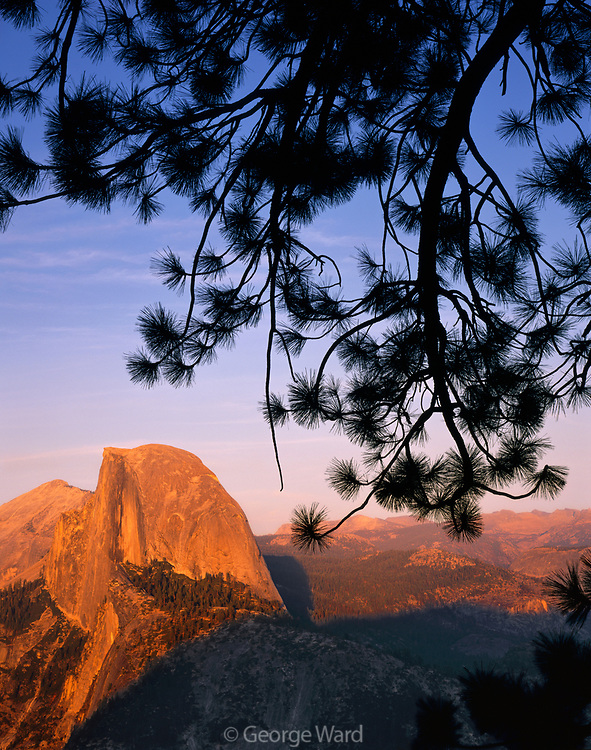 Half Dome and Jeffrey Pine from Glacier Point,Yosemite National Park, California