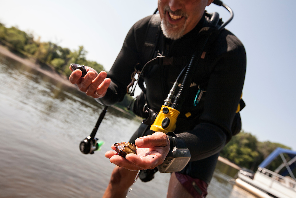 National Park Service biologist Byron Karns holds a tagged Winged Mapleleaf mussel he had just found on a dive near Pike Island in the Mississippi River August 14, 2015. This federal critically endangered river mussel has been reintroduced to the area.
