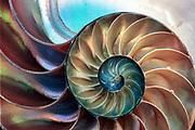 Nautilus shell, New Zealand