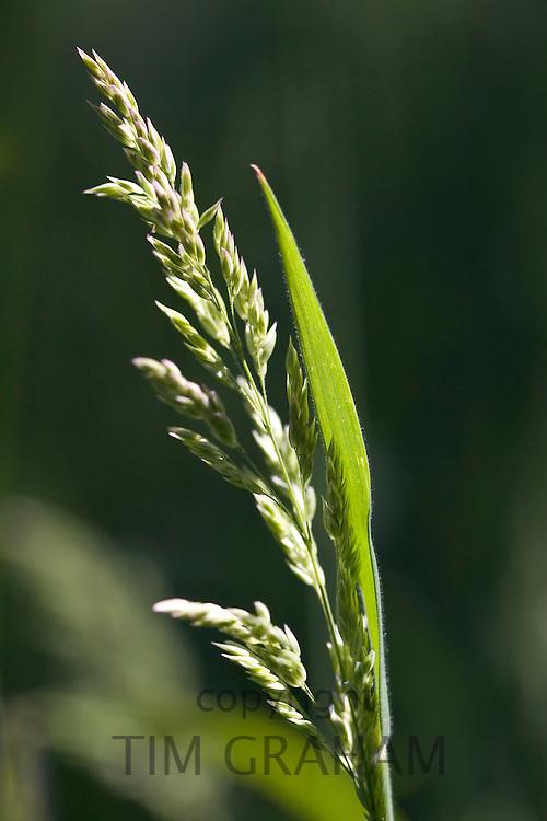 Grasses, Oxfordshire, United Kingdom